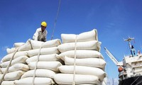베트남 쌀 단가, 이주 계속 톤 당 480달러  유지