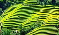 Les rizières en terrasse de Mu Cang Chai à l'honneur