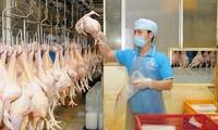 Le poulet vietnamien exporté au Japon