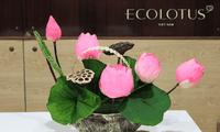 Le lotus stabilisé de Ngô Chi Công