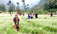 Le 5e festival des fleurs de sarrasin de Hà Giang