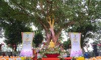 L'arbre de la Bodhi à la pagode Trân Quôc, le symbole de l'amitié Vietnam-Inde