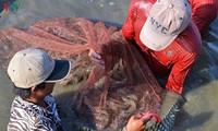 Crevettes : le delta du Mékong veut exporter plus