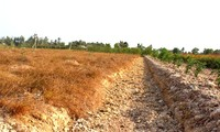 L'Union européenne aide le Vietnam à faire face à la sécheresse et à la salinisation