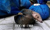 Covid-19: la consommation des animaux sauvages est l'une des causes de la propagation