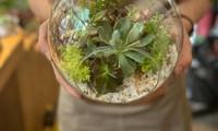 Le terrarium végétal enchante les jeunes