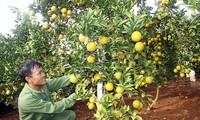 Son La: mieux exporter ses produits agricoles