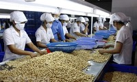 Noix de cajou: le Vietnam maintient sa première place mondiale