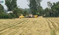 Провинция Хаузянг: во время зимне-весеннего урожая рис был собран с более чем 61 тыс. гектаров