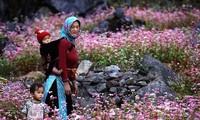 동반 돌고원에 벚꽃축제