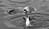 """Triển lãm ảnh """"Khoảnh khắc thiên nhiên"""": Giới thiệu những hình ảnh ấn tượng về sếu đầu đỏ và chim hải âu"""