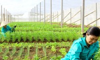 Proyek makan bersih demi sumber bahan makanan  bersih untuk komunitas