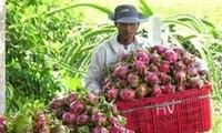 Mendorong kerjasama pertanian dan pengembangan pedesaan