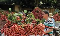 Menciptakan tempat berdiri  bagi buah-buahan Vietnam di pasar dunia