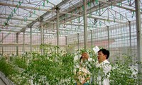 Внедрение научно-технических достижений в сельскохозяйственное производство в г.Хошимине