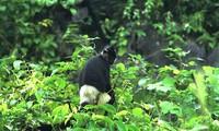 Девственный мангровый лес Ванлонг
