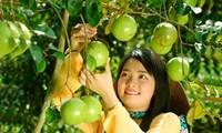Популярные фрукты на юго-западе Вьетнама