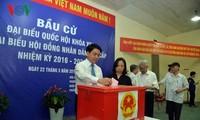 Вьетнамцы за границе и китайский учёный верят в успех выборов во Вьетнаме