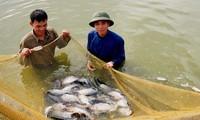 Провинция Хаузянг стремится к тому, чтобы 70% крестьянских дворов были преуспевающими