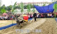 В провинции Туенкуанг прошёл праздник выхода на рисовые поля