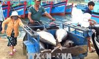 ВПСТТП окажет положительное воздействие на деятельность крестьян и рыбаков