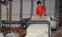 Деревня по производству рисовой бумаги Локыонг провинции Хайзыонг