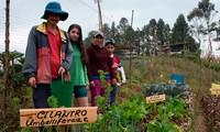 Amérique latine et Caraïbes: première région en développement susceptible d'éradiquer la faim