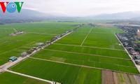 La production de riz au Vietnam va répondre aux normes internationales