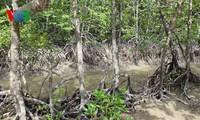 La loi amendée sur la protection et le développement de la forêt en débat