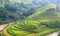 Bientôt la Semaine culturelle et touristique des rizières en terrasses de Mu Cang Chai
