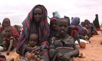 Environ 76 millions de personnes ont besoin d'aide alimentaire d'urgence