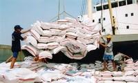 Le CPTPP devrait augmenter les exportations de riz vietnamien