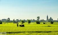 Thai Binh mise sur le remembrement pour développer l'agriculture