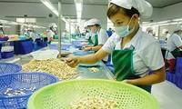 Le Vietnam voudrait exporter pour 3,7 milliards de dollars de noix de cajou en 2018
