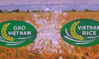 Ouverture du Festival du riz du Vietnam