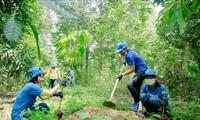 Plantation d'un milliard d'arbres