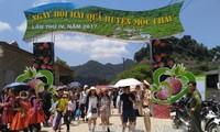 Sôi động ngày hội hái quả trên Cao nguyên Mộc Châu, Sơn La
