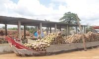 Nông dân Bến Tre chú trọng xây dựng, hoàn thiện chuỗi giá trị nông sản
