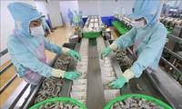 Hoa Kỳ hủy bỏ áp dụng thuế chống bán phá giá đối với tôm Minh Phú