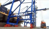 Cảng Hải Phòng khai thác 42 lượt tàu trong tuần nghỉ Tết