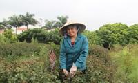Văn Lâm – phát triển kinh tế từ nghề truyền thống
