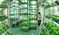 การพัฒนาการเกษตรที่ใช้เทคโนโลยีขั้นสูงในนครโฮจิมินห์