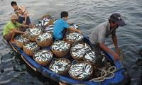 ความร่วมมือในการบริหารจัดการด้านการประมงและการอนุรักษ์สิ่งแวดล้อมในทะเลตะวันออก