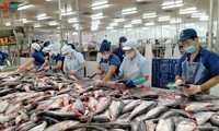 ประยุกต์ใช้เทคโนโลยีขั้นสูงในการผลิตปลาสวายเพื่อส่งออก