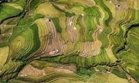 ช่างภาพเวียดนามคว้ารางวัลในการประกวดภาพถ่ายระหว่างประเทศ
