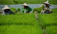 ส่งเสริมบทบาทของสตรีอาเซียนในภาคการเกษตร