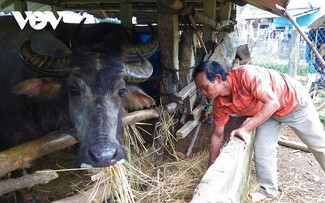 赫耶族同胞讲述靠水牛扶贫减贫的故事