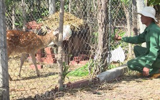 Spotted deer farming lucrative in Gia Lai province