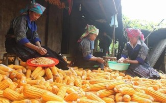 Cooperative and craft village model proves effective in Ha Giang