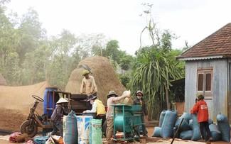 ハバウ村の変貌